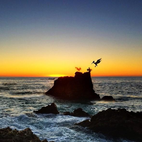 Pelicans of Los Cabos